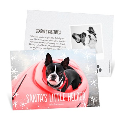 Dog Has His Snow Day Photo Christmas Cards
